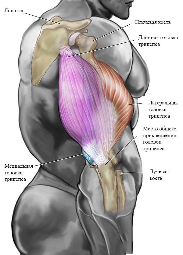 Упражнения на polstivarempehu