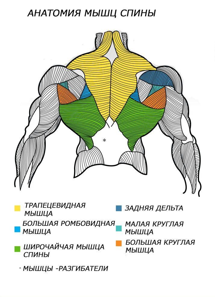 тренировка мышц фото